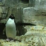 Experience Chicago's Shedd Aquarium