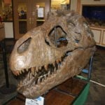 Norm The T-Rex at Eisenhower Library in Harwood Heights